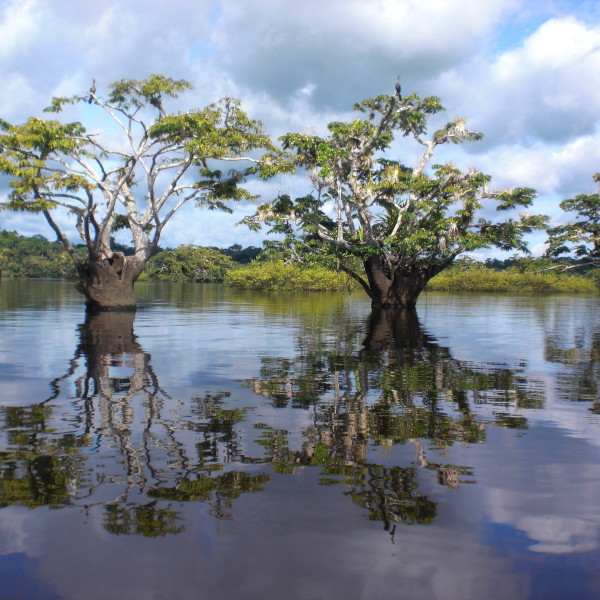 The Climate in the Amazon Rainforest of Ecuador